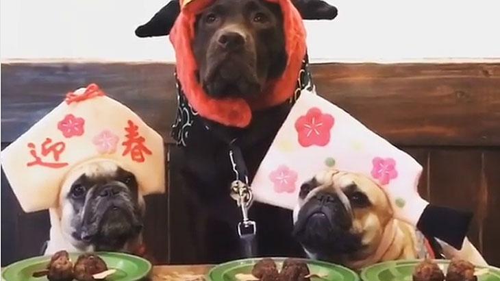 Vídeos de labrador e pugs disputando comida é a melhor coisa que você verá hoje