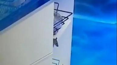 Imagem de um rato na cozinha do BBB20