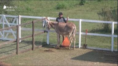 Na área dos animais, Lucas Cartolouco cuida de jumenta em A Fazenda 2020