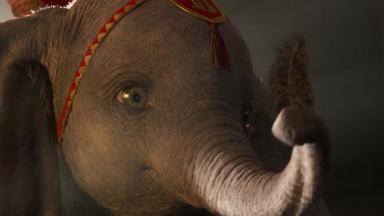 Elefante com uma pena