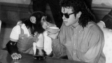 Michael Jackson dando bebida ao chimpanzé