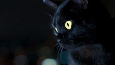 O gato León