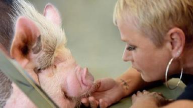 Xuxa frente a frente com um porco