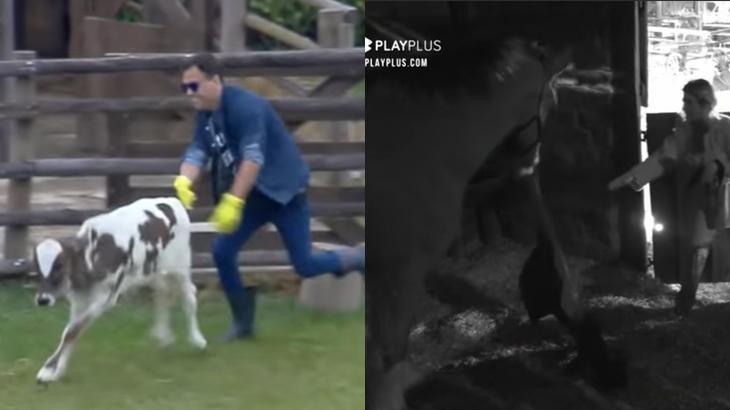 Viny Vieira e Tati Dias foram surpreendidos por animais no reality show A Fazenda 11 (Reprodução/Montagem)