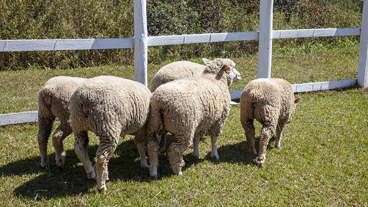 A Fazenda seguirá com vários animais, entre eles a chegada de uma jumenta com seu filhote