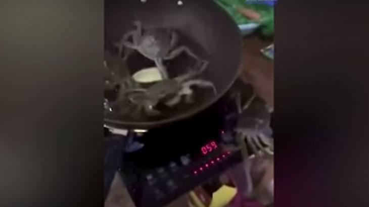 Caranguejo salva a vida de outros crustáceos ao sair de frigideira e desligar o fogão