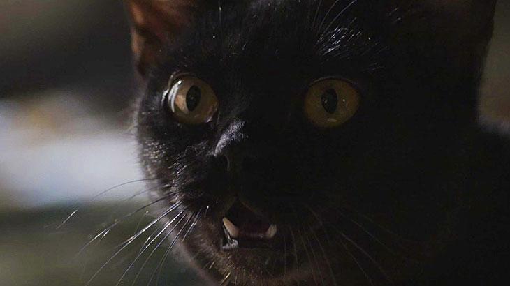 Gato León foi atropelado em
