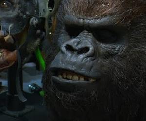 gorilagrodd-theflash.jpg
