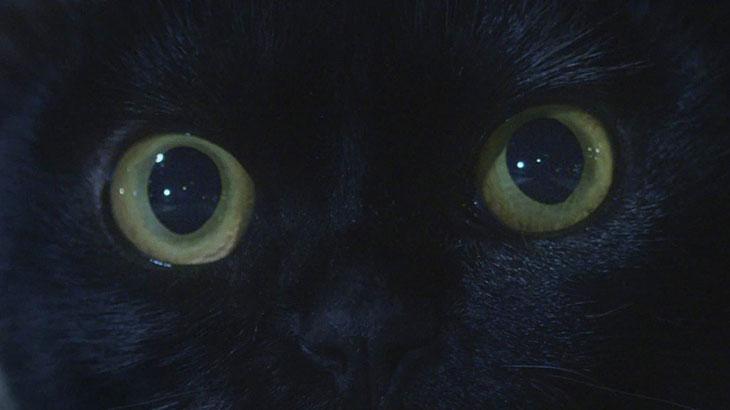 Léon com um olhar penetrante