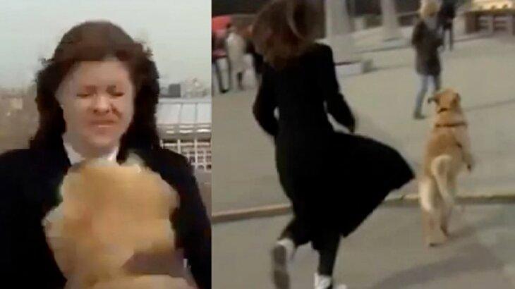 Repórter tendo o microfone roubado por cachorro e, depois, correndo atrás do animal