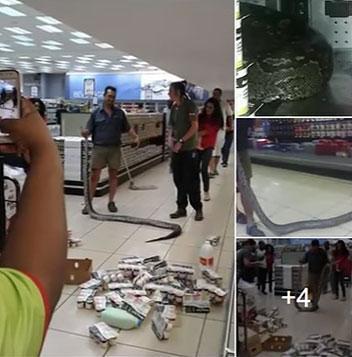 Homem vai pegar iogurte em geladeira de supermercado e encontra cobra píton de 3,5 metros