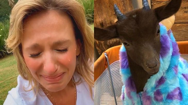 Luisa Mell lamenta morte de cabrito de estimação