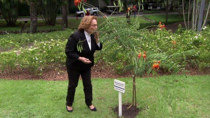 Nicette Bruno ganha árvore ao lado da de Paulo Goulart nos Estúdios Globo