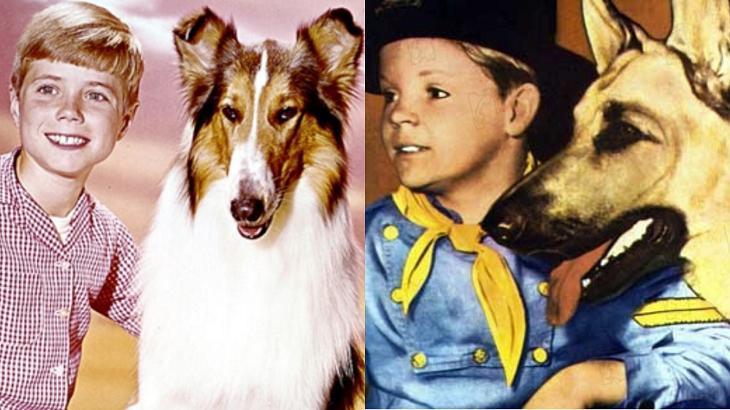 Lassie (à esquerda) e As Aventuras de Rin Tin Tin (à direita) em foto montagem